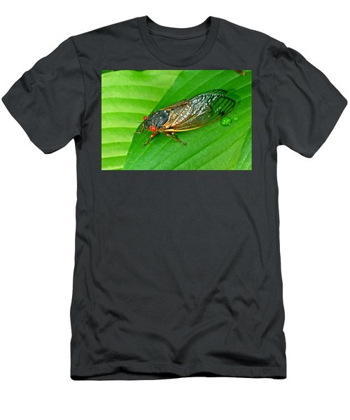 17 Year Periodical Cicada Men's T-Shirt (Athletic Fit)