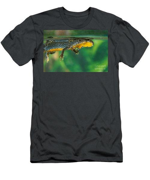 Alpine Newt Triturus Alpestris Men's T-Shirt (Athletic Fit)