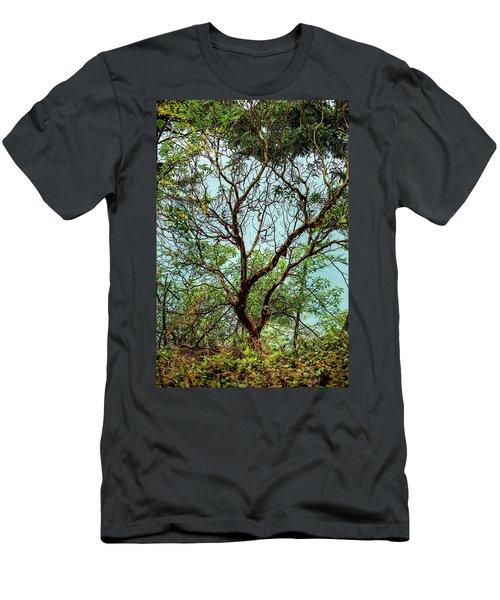 Arbutus Tree Men's T-Shirt (Athletic Fit)