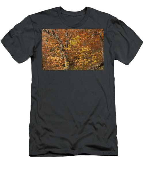 Autumn In The Woods Men's T-Shirt (Athletic Fit)