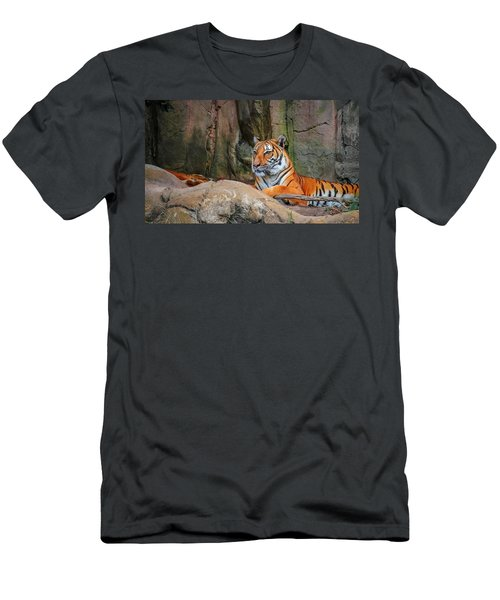 Fort Worth Zoo Tiger Men's T-Shirt (Athletic Fit)