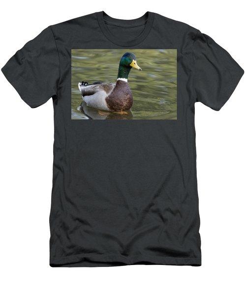 Mallard Drake Santa Cruz Monterey Bay Men's T-Shirt (Athletic Fit)