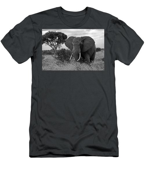 The Old Bull Men's T-Shirt (Athletic Fit)