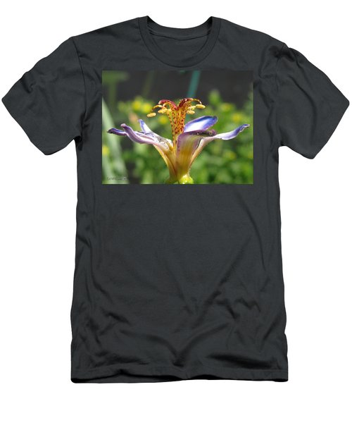 Tricyrtis Named Taipei Silk Men's T-Shirt (Athletic Fit)