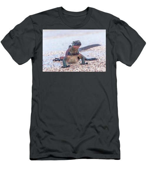Marine Iguana On Galapagos Islands Men's T-Shirt (Slim Fit) by Marek Poplawski