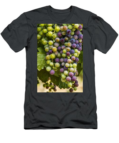 Red Wine Grapes Hanging On The Vine Men's T-Shirt (Athletic Fit)