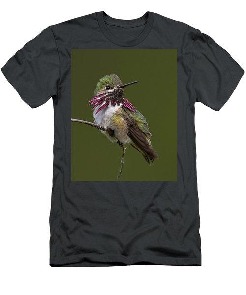 Calliope Hummingbird Men's T-Shirt (Athletic Fit)