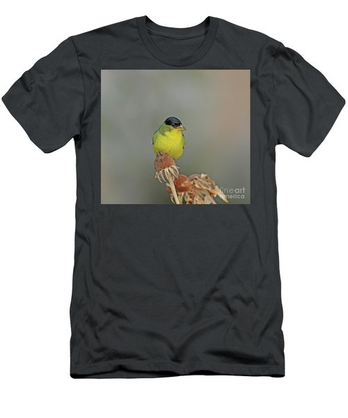 Lesser Goldfinch Men's T-Shirt (Athletic Fit)