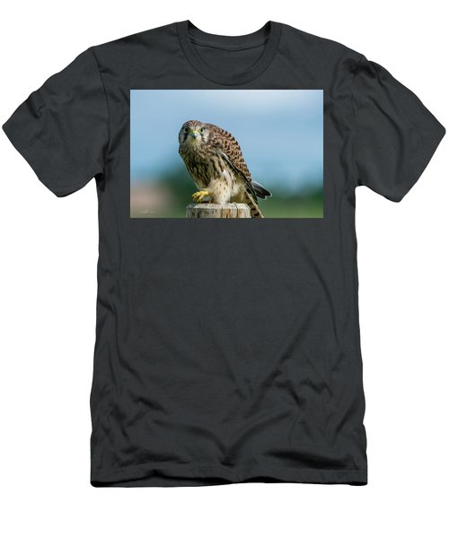A Beautiful Young Kestrel Looking Behind You Men's T-Shirt (Athletic Fit)