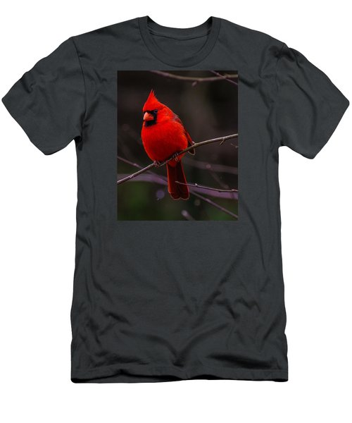 Men's T-Shirt (Slim Fit) featuring the photograph A Cardinal In January  by John Harding
