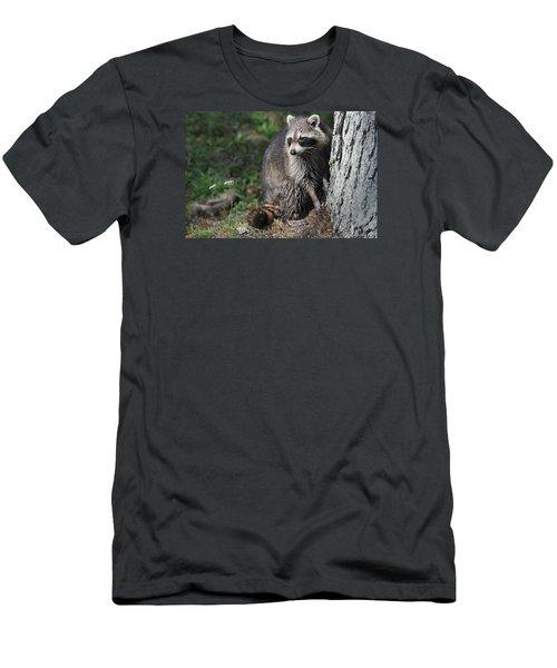 A Curious Raccoon Men's T-Shirt (Slim Fit) by Lisa DiFruscio
