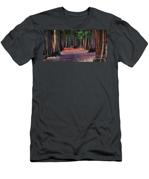 A Path Of Redwoods Men's T-Shirt (Athletic Fit)