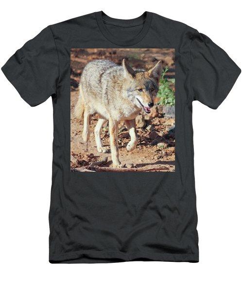 A Portrait Of A Coyote, Canis Latrans Men's T-Shirt (Athletic Fit)