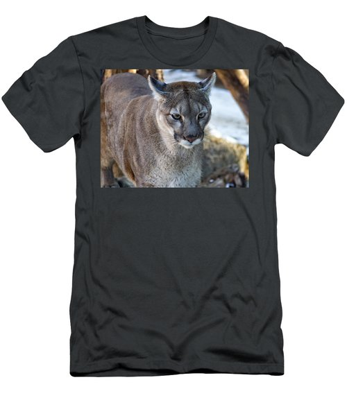 A Stunning Mountain Lion Men's T-Shirt (Athletic Fit)