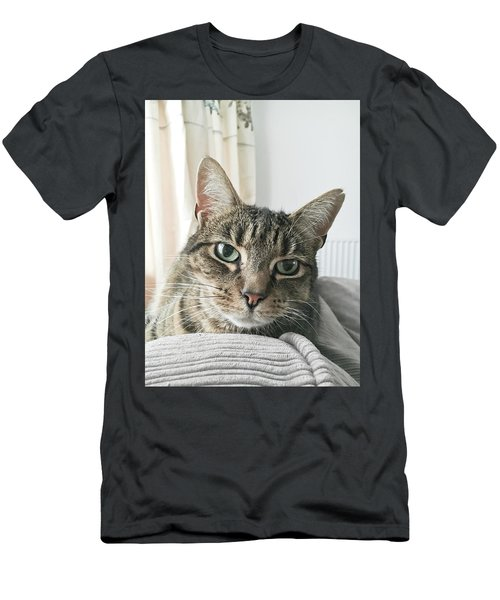 A Tabby Cat Close Up Men's T-Shirt (Athletic Fit)