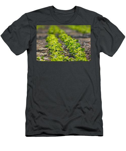 Agriculture- Soybeans 1 Men's T-Shirt (Athletic Fit)