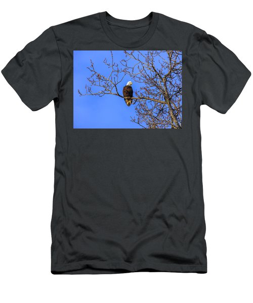 Alaskan Bald Eagle In Tree At Sunset Men's T-Shirt (Athletic Fit)