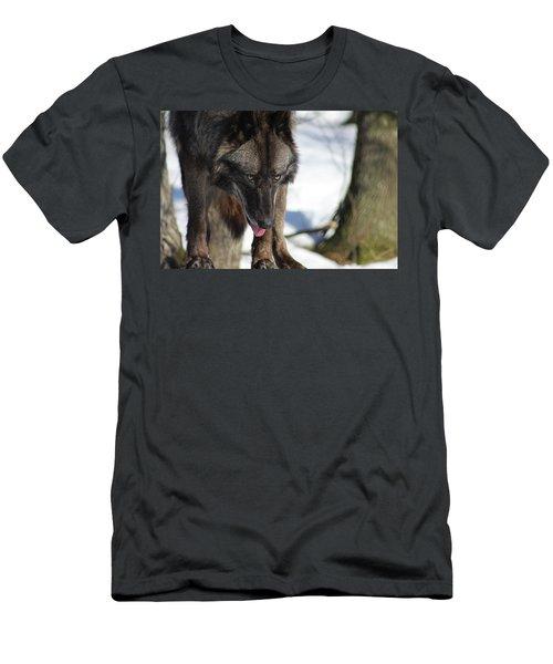 Alaskan Tundra Wolf Men's T-Shirt (Athletic Fit)