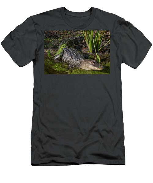 Algae Gator Men's T-Shirt (Athletic Fit)