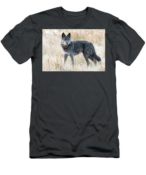 Alpha Female Men's T-Shirt (Athletic Fit)
