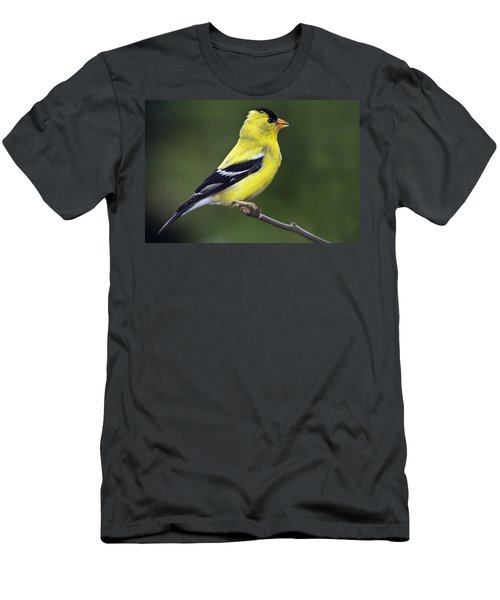 American Golden Finch Men's T-Shirt (Athletic Fit)