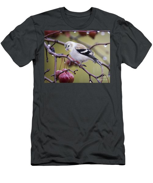 American Goldfinch In The Rain Men's T-Shirt (Athletic Fit)