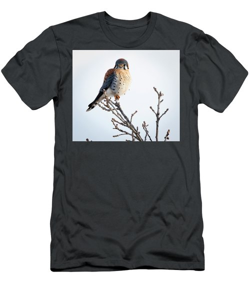 American Kestrel At Bender Men's T-Shirt (Athletic Fit)