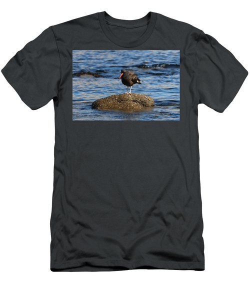 American Oystercatcher - 2 Men's T-Shirt (Athletic Fit)