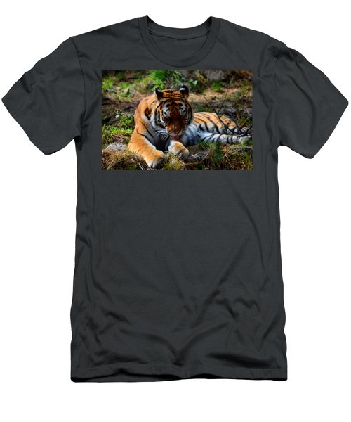 Men's T-Shirt (Slim Fit) featuring the mixed media Amur Tiger 2 by Angelina Vick