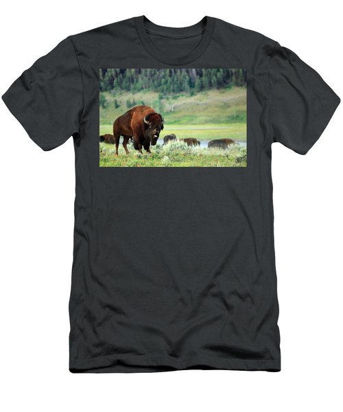 Angry Buffalo Men's T-Shirt (Athletic Fit)