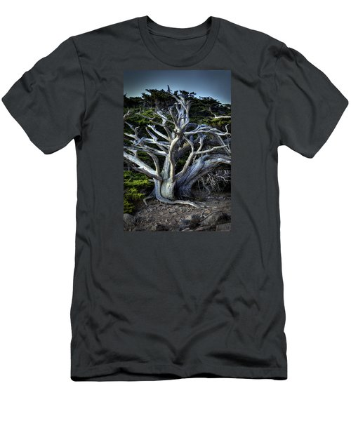 Ansel's Cypress Men's T-Shirt (Athletic Fit)