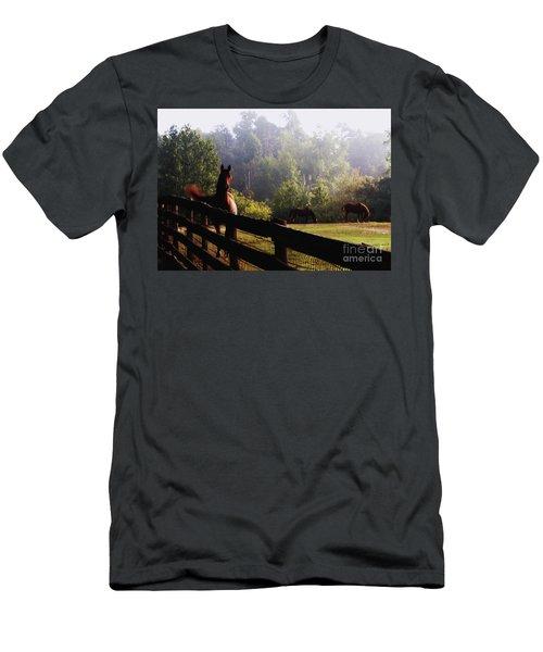 Men's T-Shirt (Slim Fit) featuring the painting Arabian Horses In Field by Debra Crank