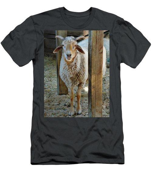 Awassi Sheep Men's T-Shirt (Athletic Fit)