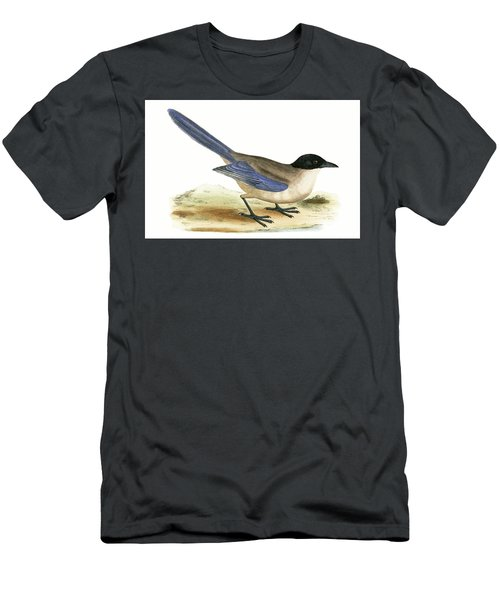 Azure Winged Magpie Men's T-Shirt (Slim Fit) by English School