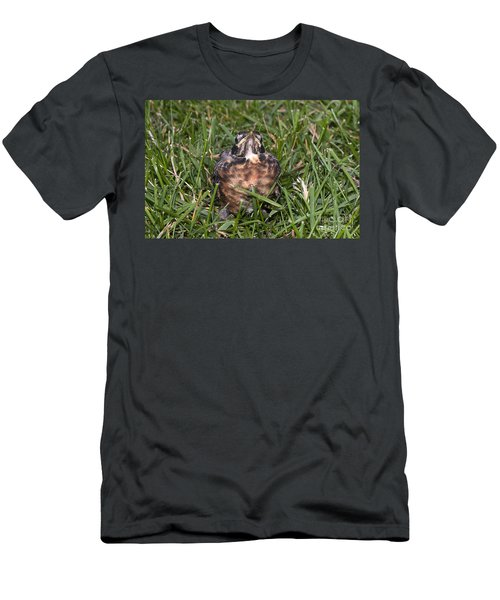 Baby Robin Men's T-Shirt (Athletic Fit)