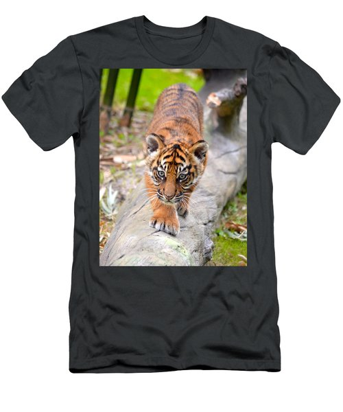 Baby Sumatran Tiger Cub Men's T-Shirt (Slim Fit) by Richard Bryce and Family