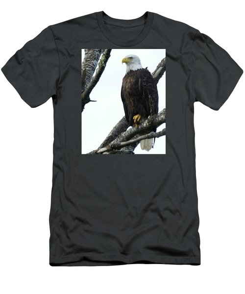 Bald Eagle 4 Men's T-Shirt (Slim Fit) by Steven Clipperton