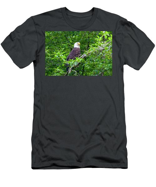 Bald Eagle In Tree Men's T-Shirt (Athletic Fit)