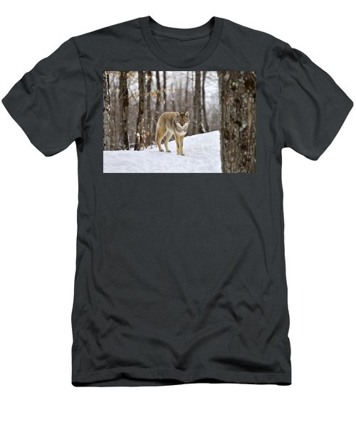 Beauty Of The Woods Men's T-Shirt (Athletic Fit)