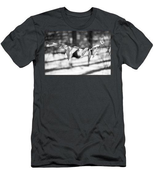 Beech Leaves 5 - Uw Arboretum - Madison Men's T-Shirt (Athletic Fit)