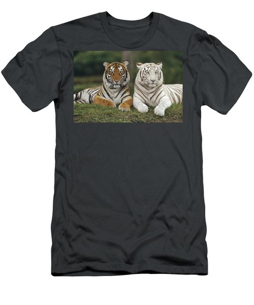 Bengal Tiger Team Men's T-Shirt (Athletic Fit)
