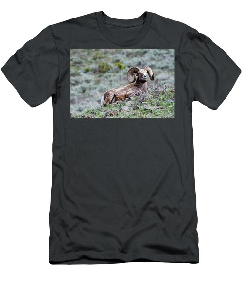 Men's T-Shirt (Athletic Fit) featuring the photograph Big Horn Sheep #2 by Scott Read