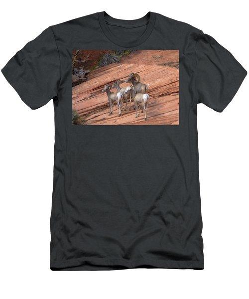 Big Horn Sheep, Zion National Park Men's T-Shirt (Athletic Fit)