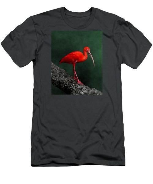 Bird On A Catwalk Men's T-Shirt (Athletic Fit)