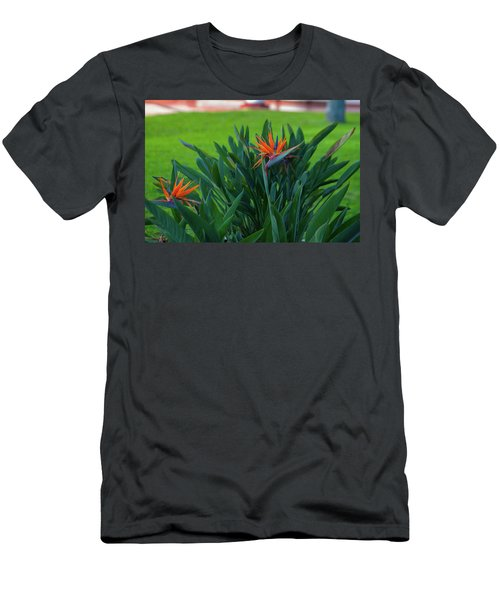 Birds Of Paradise, Vistoria Falls Hotel Men's T-Shirt (Athletic Fit)