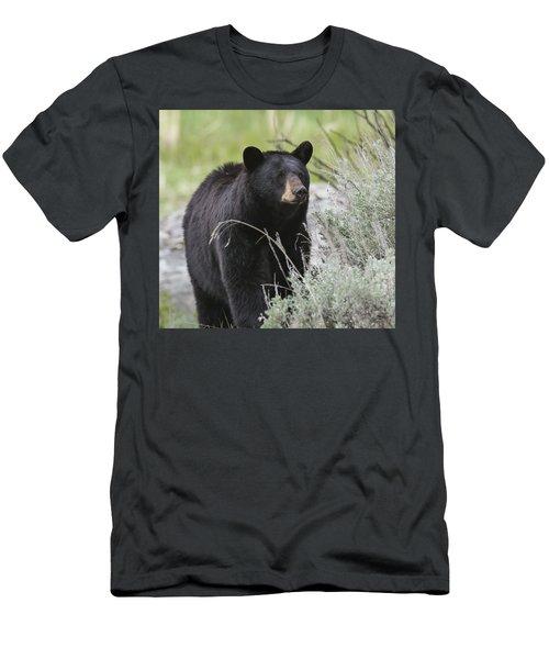 Black Bear Sow Men's T-Shirt (Athletic Fit)
