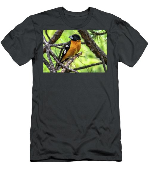 Black-headed Grosbeak Men's T-Shirt (Athletic Fit)