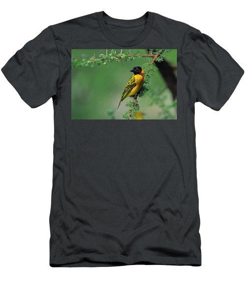 Black-headed Weaver Men's T-Shirt (Athletic Fit)