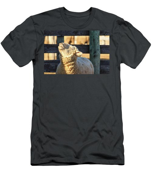 Bleating Sheep Men's T-Shirt (Athletic Fit)