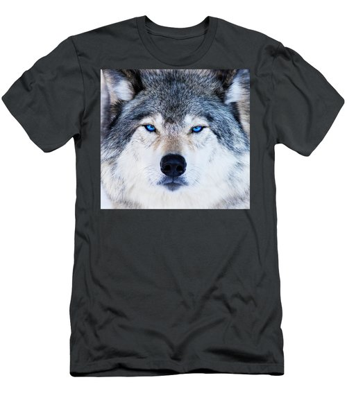 Men's T-Shirt (Slim Fit) featuring the photograph Blue Eyed Wolf Portrait by Mircea Costina Photography